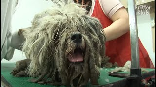 Dirty, Long-Haired Dog Bawls,Thinking Of Her Puppy She Left In Trash House | Kritter Klub