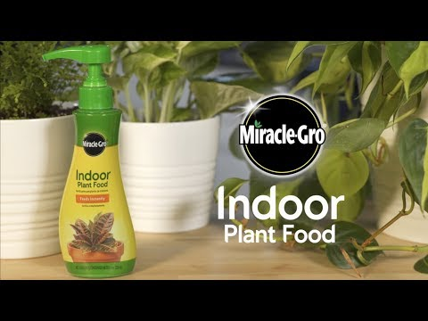 How to Use Miracle-Gro® Indoor Plant Food to Feed Your Houseplants