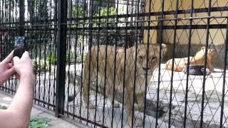 Zwierzęta z chorzowskiego zoo