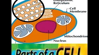 Cells in Human Body -Structure ,Parts,Function