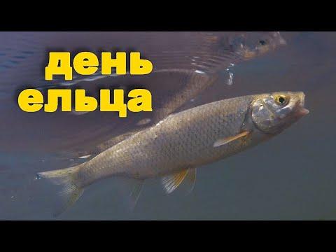 ДЕНЬ ЕЛЬЦА или вот такая рыбалка на голавля. Ловля рыбы на жуков. Красивая природа.
