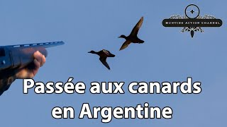 Chasse aux canards & perdreaux en Argentine - Hunting ducks and partridge in Argentina