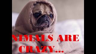funny animal videos |funny animal videos try not to laugh