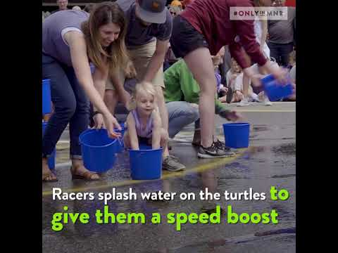 Try Turtle Racing In Minnesota