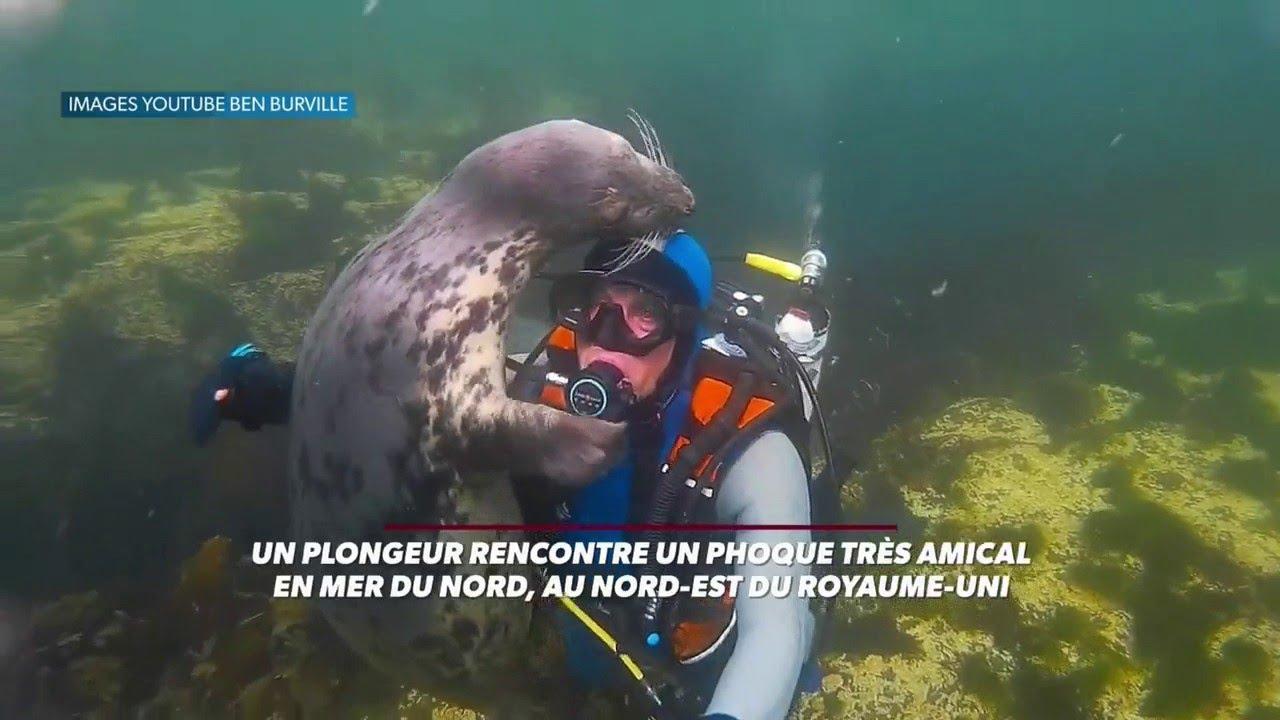 rencontres entre plongeurs)
