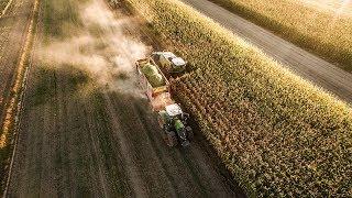 Zbiór Kukurydzy [Jaguar 940 / Fendt 824 ] Kieł-Rol Usługi Rolnicze #dji #agro