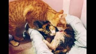 Кот-отец не отходит от родившей кошки