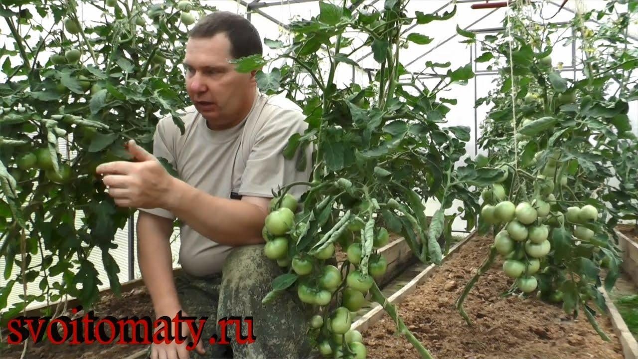 Уход за разными сортами томатов