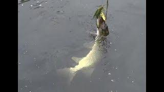 Ловим щуку спиннингом на малой реке. О рыбалке всерьез. Выпуск 270 HD