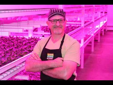 Robert Colangelo on Indoor Vertical Farming