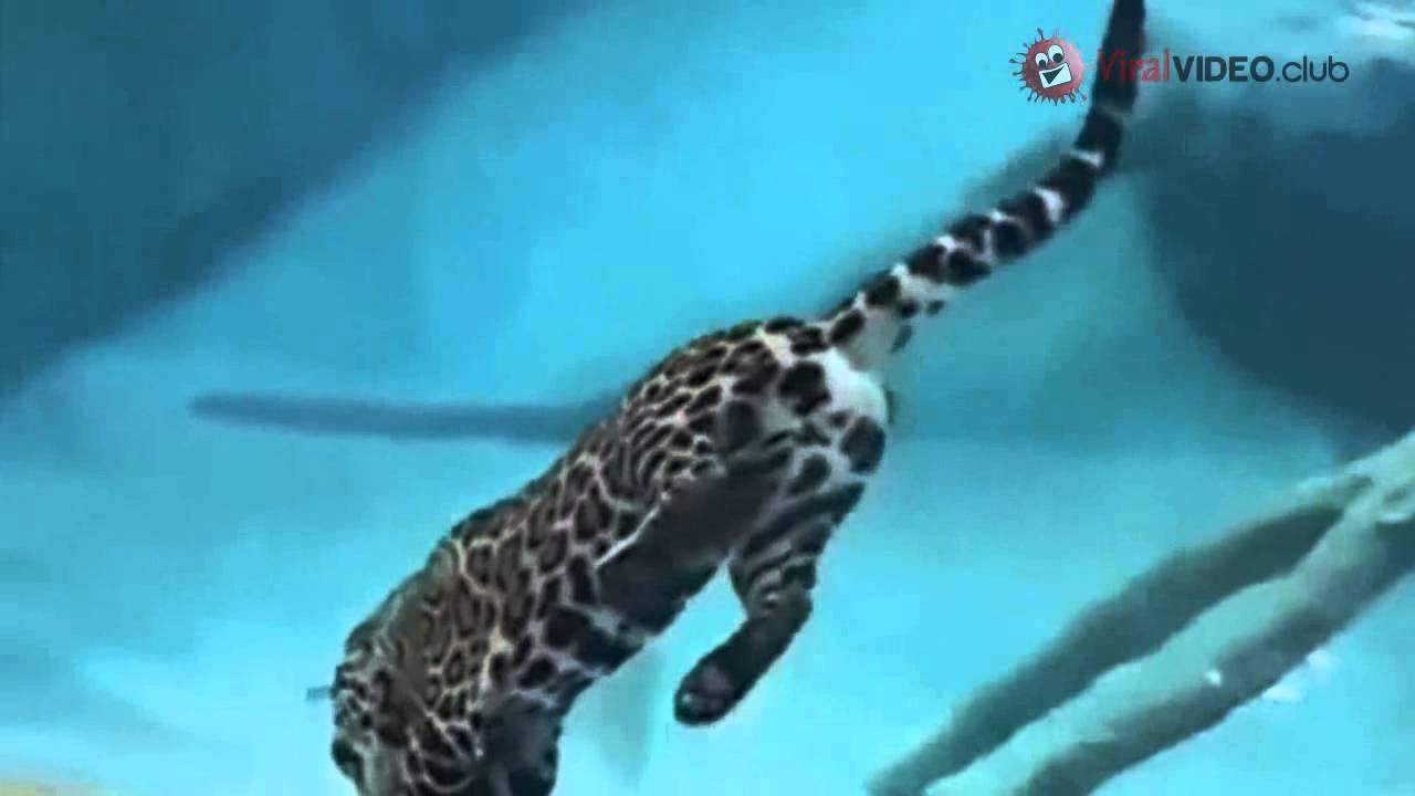 amazing! jaguar fishing underwater - youtube, Reel Combo