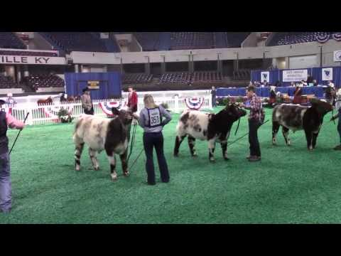 Beef Show, Freedom Hall West - November 14, 2016