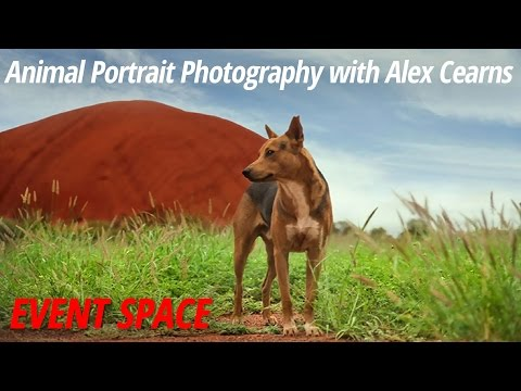 Animal Portrait Photography with Alex Cearns