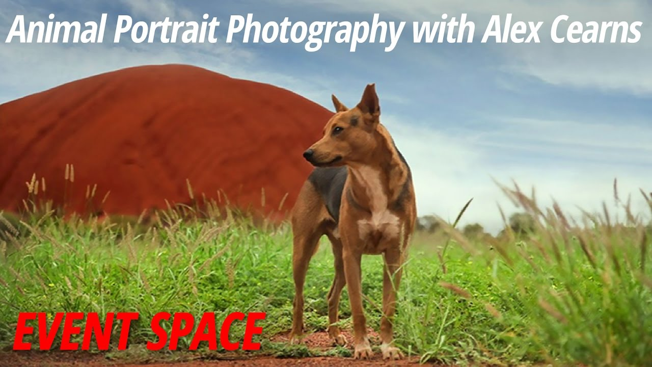 a1a985f30915a Animal Portrait Photography with Alex Cearns - YouTube