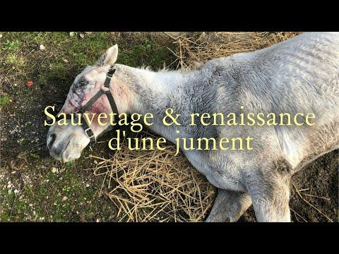 Sauvetage Et Renaissance D'une Jument