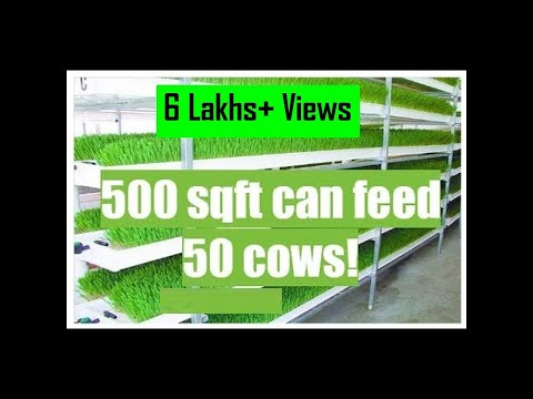 Dairy Farming 02 - Open Air Hydroponic Fodder Machine (Hindi