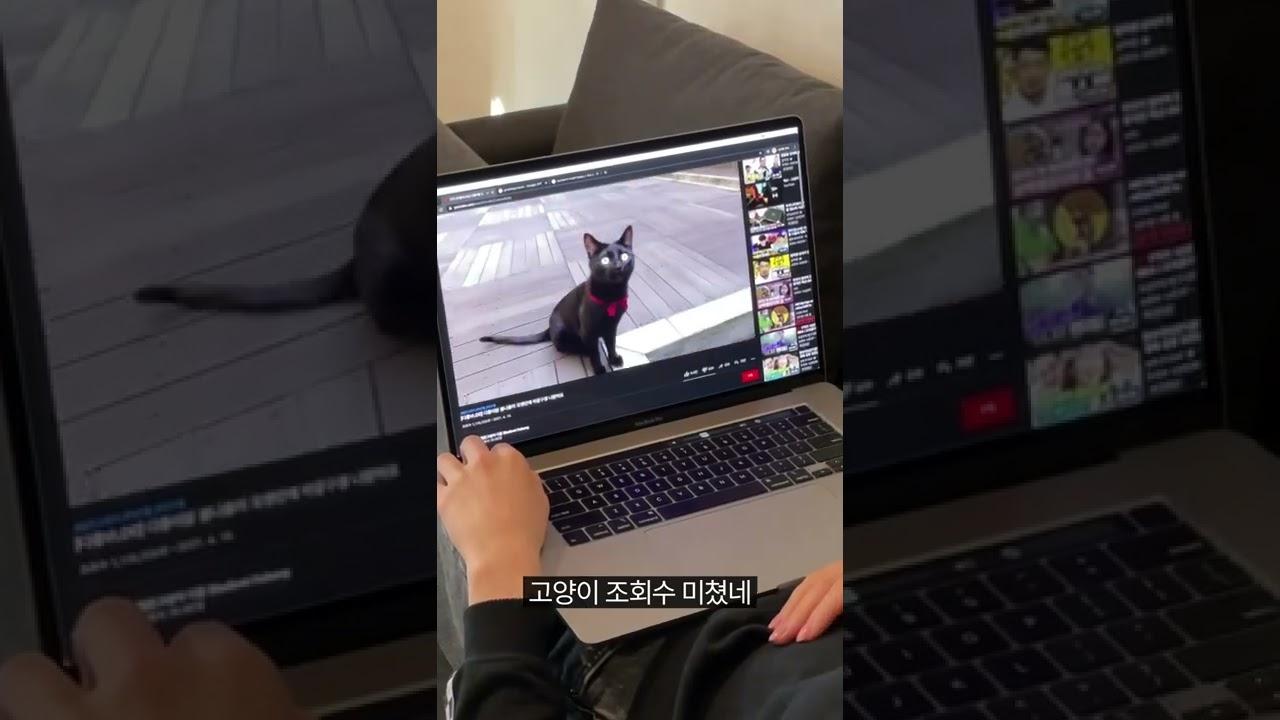 천재 고양이 다홍이를 본 진돗개의 반응