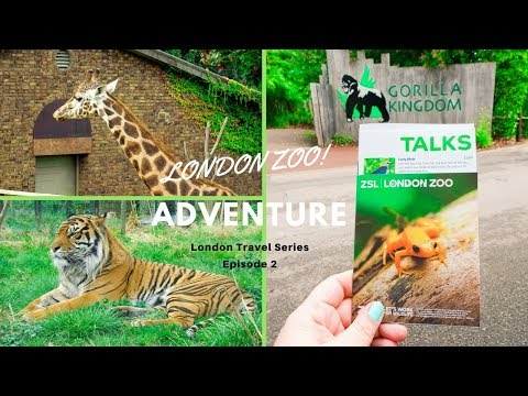 London Zoo Adventure