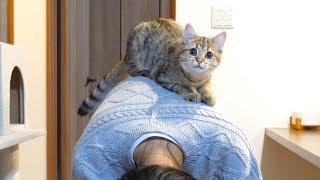 うちの猫は妹の背中を遊び場にするようです...!