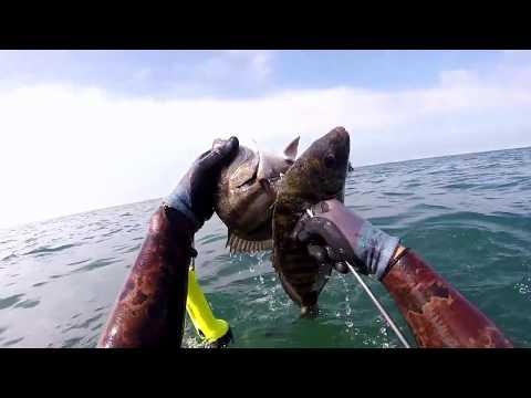 GoPro Spearfishing Agadir Morocco 2018 # 5   , Seiche , Congre , Sar , Haumard