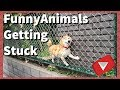 Animals Getting Stuck [Funny] (TOP 10 VIDEOS)