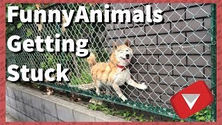 Animals Getting Stuck [Funny] (TOP 10 VIDEOS) thumbnail