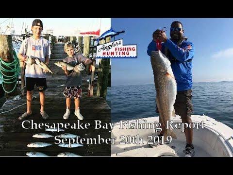 Chesapeake Bay Fishing Report-September 20th 2019