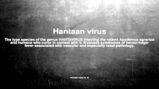 Medical vocabulary: What does Hantaan virus mean