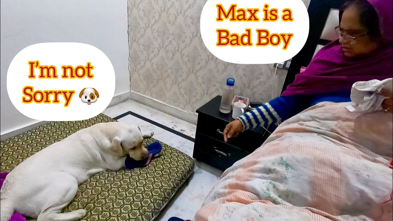 Max Gets Scolded From Mom For Destroying Her Sleepers, He Wasnt Sorry. Funny Dog Video.