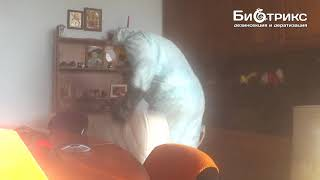 видео Срочное уничтожение клопов