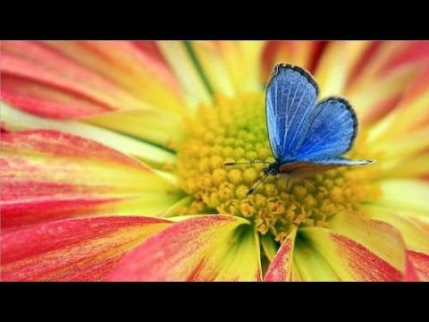"""""""Der kleine, blaue Schmetterling lernt die Angst kennen"""".Eine hilfreiche AHA-Geschichte."""