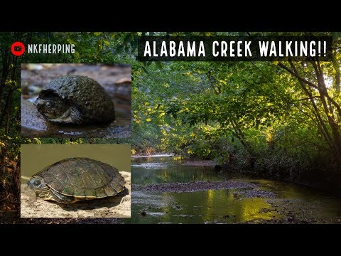 Alabama Creek Walking: Snakes And Turtles