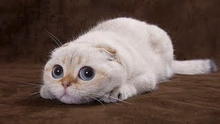 ♥Cute Cats and Kittens Doing Funny Things 2018♥ #4 - Funny Cat compilation