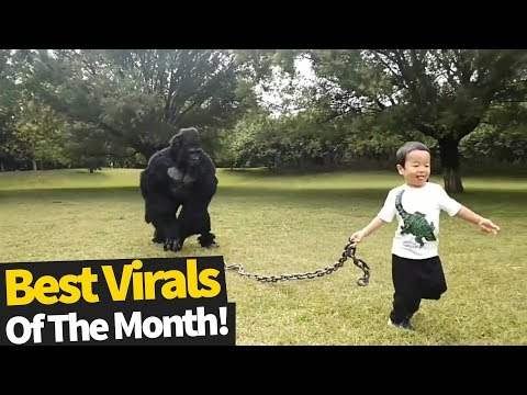 Mel Taylor - Best October Viral Video... Some GOOD Ones in HERE!