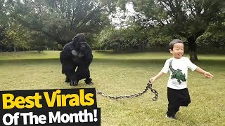 Movie Top 60 Viral Videos Of The Month October 2019 from