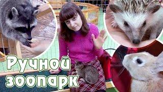 Ручной зоопарк в Смоленске(Видео из ручного зоопарка в Смоленске в ТРЦ