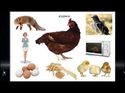 Авторська дидактична гра Академія наук Жучка Жу