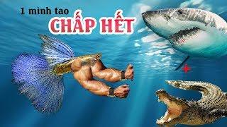 Loài cá NGUY HIỂM nhất thế giới là cá 7 màu!!!