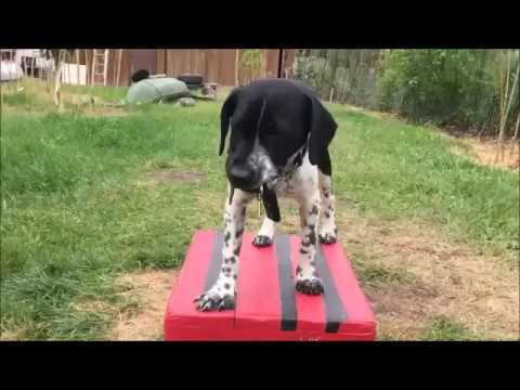 30 minutes of Dog Training with 2 puppies and Peter Caine