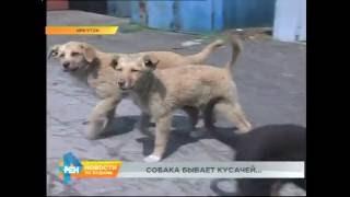 Собака напала на ребёнка в Иркутске(И свидетелей полно, и преступник известен. Бродячая собака напала на 6-летнего мальчика в Иркутске. Наша..., 2016-06-14T07:06:23.000Z)