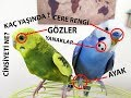 Muhabbet Kuşu Yaş ve Cinsiyet Tahmini