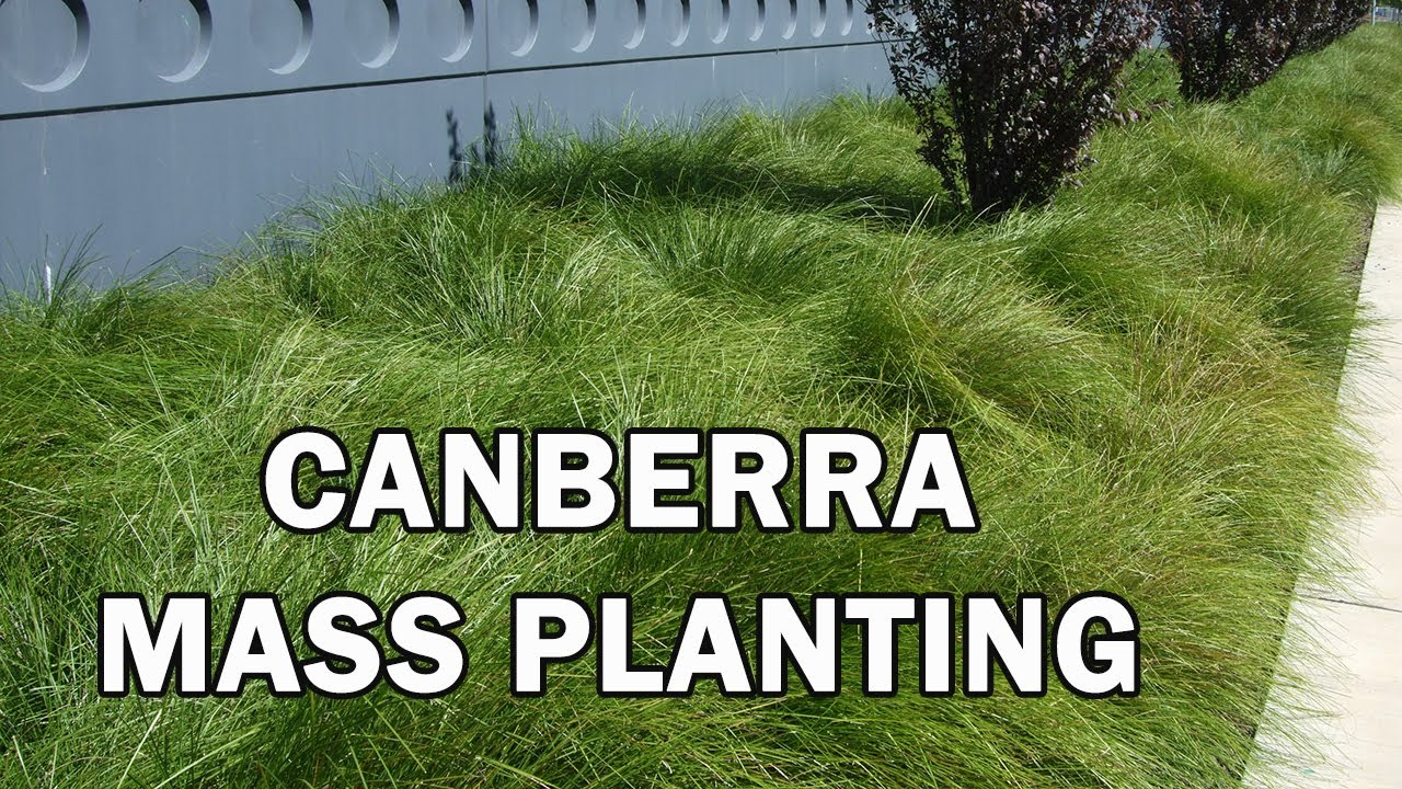 Top 10 Plants For Mass Planting In Canberra Youtube
