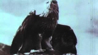 Неизвестная война, фильм 9-й. Битва за Кавказ.