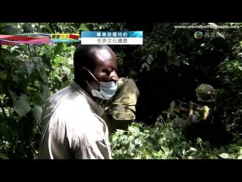 [Cantonese] Congo Democratic Republic of the Congo Kahuzi Biega National Park 刚果 卡胡兹-别加国家公园