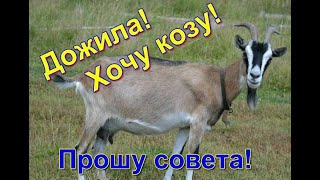 хочу купить козу, выбираю породу