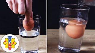 Floating Egg Experiment #scienceexperiment #shorts #backtobasics