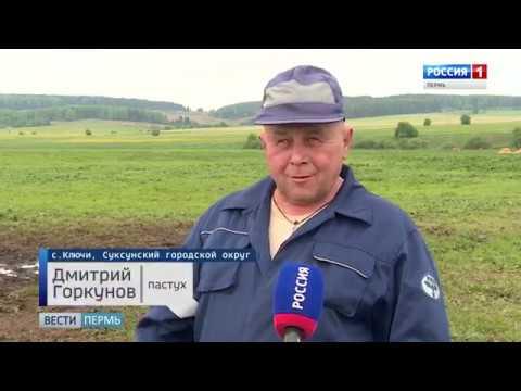 """""""Вести Пермь"""" - вечерний выпуск 31.05.19"""