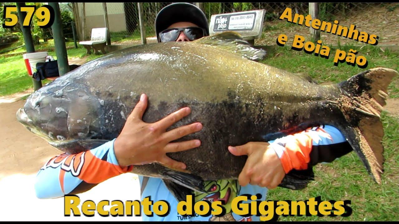 Pesqueiro Recanto dos Gigantes - As anteninhas salvando pescarias - Programa Fishingtur 579