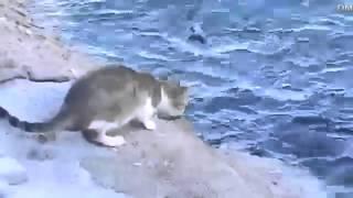 Cat fisherman / Кот рыбак