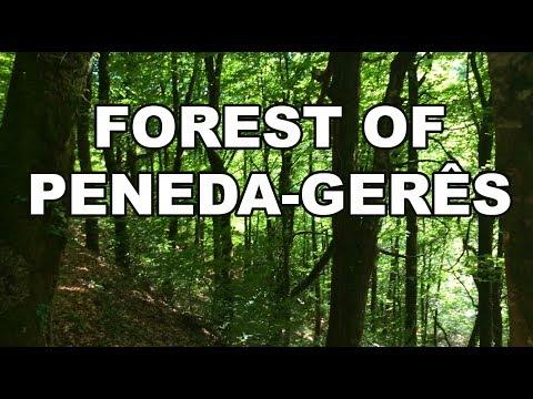 Forest of PenedaGerês National Park — Portugal